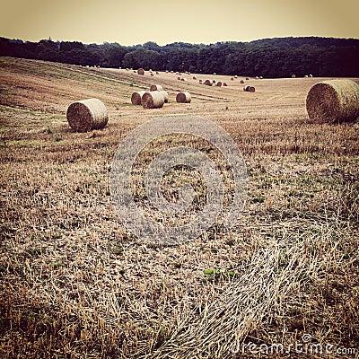 Making Hay - Kent Countryside