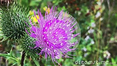 Makro-Aufnahmen von violetten Blütenblättern stock video footage