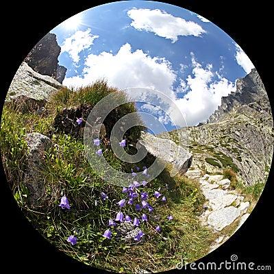 Mala studena dolina - valley in High Tatras, Slova