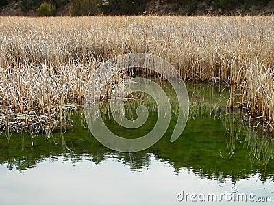 Malas hierbas altas que reflejan en el río