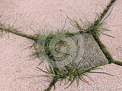 Malas hierbas que crecen alrededor de la pavimentación
