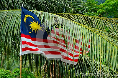 Malaysia flag flutters among tropical tree leaves