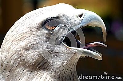 Malaysia, Langkawi: Famous eagle of langkawi