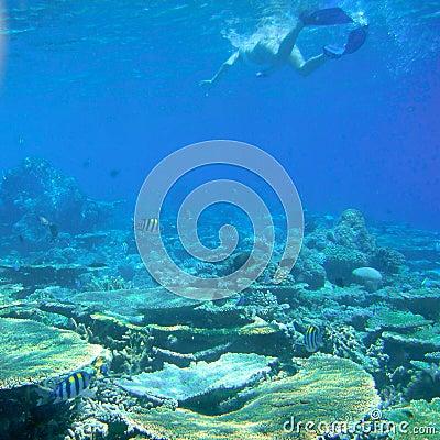 Free Maldives Royalty Free Stock Photography - 37492287