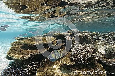 Maldives - Coral Reef
