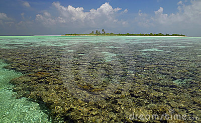 Maldives - Coral Reef - South Ari Atoll