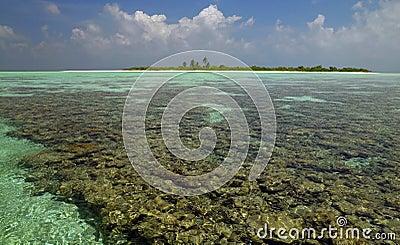 Maldives - Coral Reef - South Ari Atoll