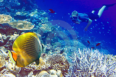 Maldives. The diver at ocean and tropical fishes i