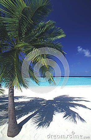 Maldives idyllic beach