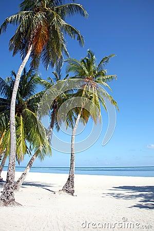 Free Maldives Island Stock Images - 3674004