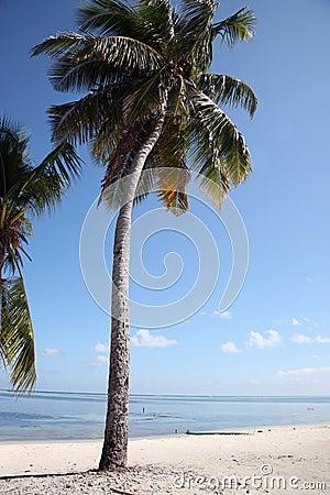 Free Maldives Island Royalty Free Stock Image - 3674076