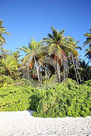 Free Maldives Island Stock Images - 3674504