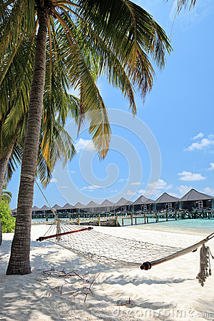 Maldives island, sandy beach, palm and hammock