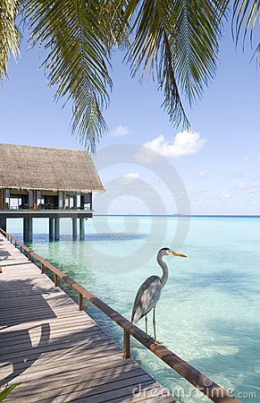 Free Maldives Seascape Royalty Free Stock Photography - 5712537