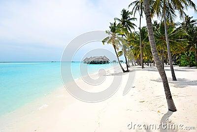 Maldives Shore