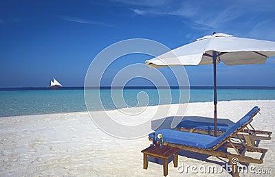Maldives tropical beach and Sun loungers