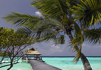 Maldives - Tropical Vacation