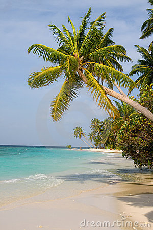 Free Maldivian Sand Beach And Coconut Trees Royalty Free Stock Images - 4011319