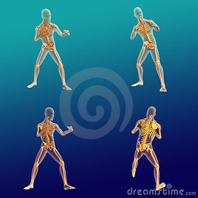 Male Anatomy 9 Stock Photography - Image: 23139892