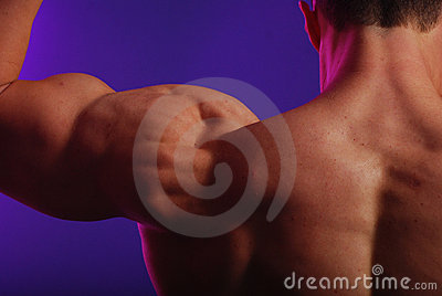Male back and shoulders
