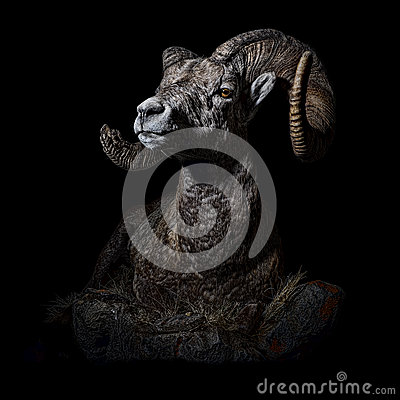 Free Male Bighorn Sheep Portrait Full Body Quartering Left Stock Photos - 88066123