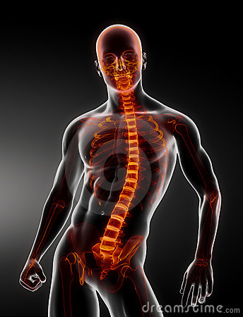 Male Body Backbone Scan