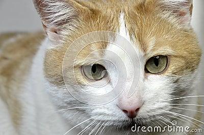 Male cat face
