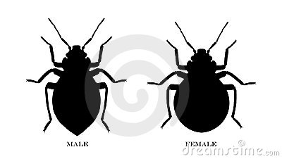 Male and Female Black Illustrated Bedbugs