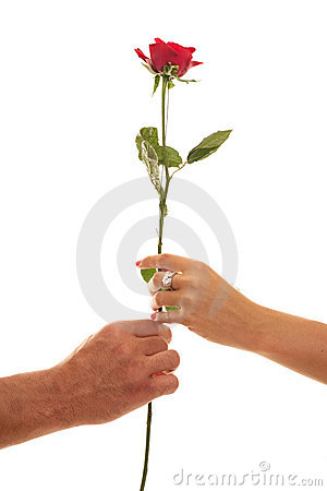 Male and Female hold a Single Red Rose of Devotion