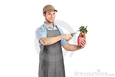 Male florist cutting a bonsai tree