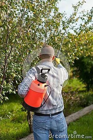 Male gardener spraying  trees