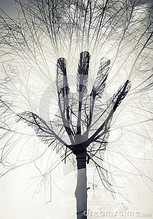 Free Male Hand Silhouette Over Sky And Leafless Tree Pattern Stock Photo - 51657850