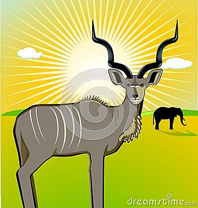 A Male Kudu