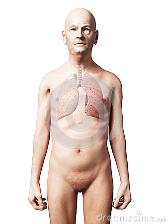 Male lung