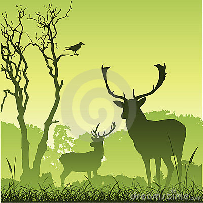 Free Male Stag Deer Stock Photo - 17756030