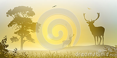 Male Stag Deer