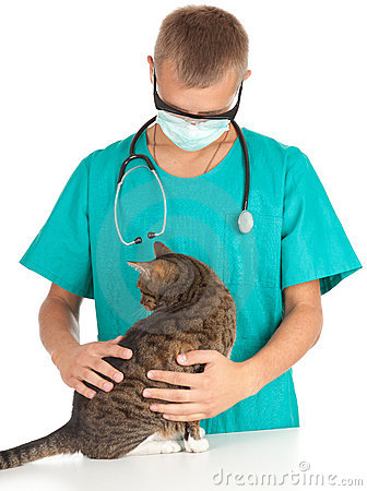 Male vet with cat in surgery