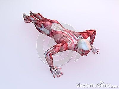 Male workout - pushups