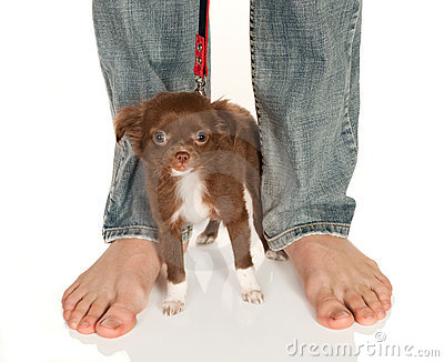 Mali doggy duży cieki