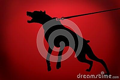 The malicious doberman dog