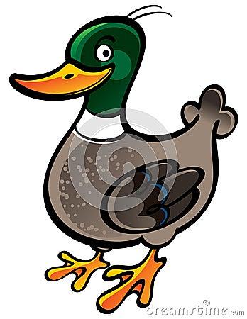 Free Mallard Duck Stock Image - 11085021