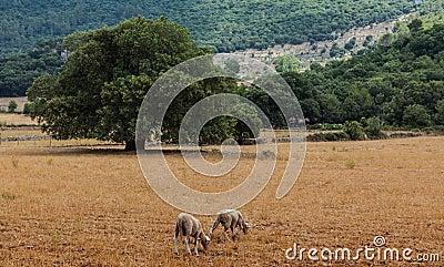 Mallorca-Landschaft
