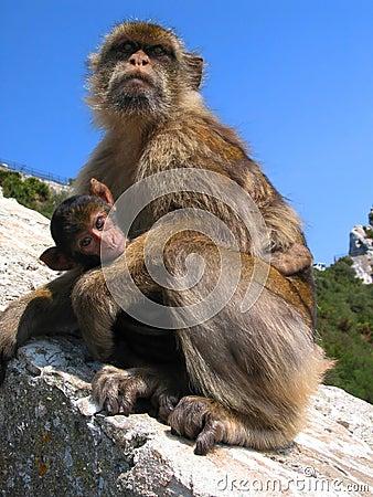 Mama ape