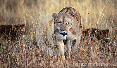 Mama auf dem Prowl
