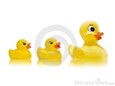 Mama duck with her children to accompany