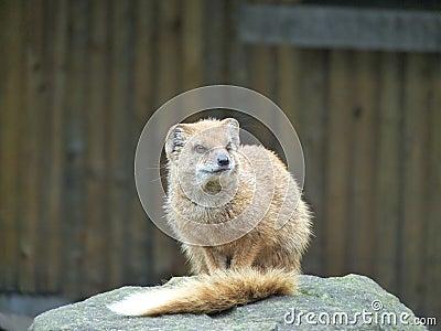 Mammal at zoo