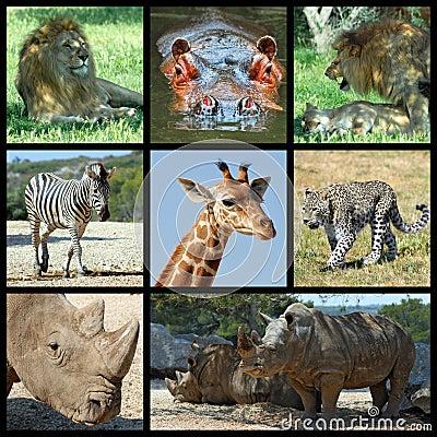 Mammals Africa mosaic
