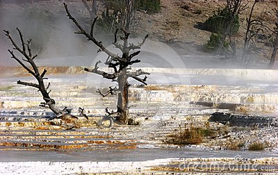Mammoth Hot Springs, Yellow stone national park