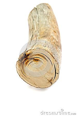 Mammoth s tusk