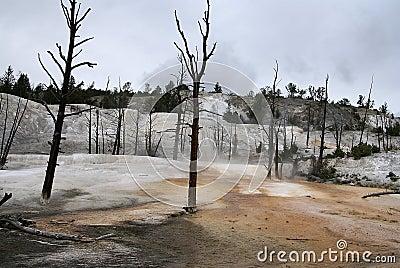Mammoth thermal springs, Yellowstone park, USA
